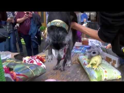 Le plus vieux chien du monde fête ses 21 ans