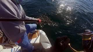 Рыбалка на море.Ловим лакедру. Popping yellowtail (Buri-Hiramasa)