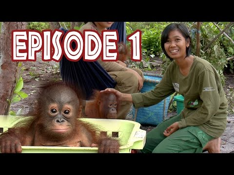 We Love Orangutans | Mia Puspita - Babysitter at BOS Foundation Nyaru Menteng