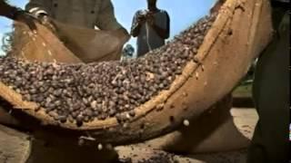 Кофе в зернах - Знак качества - Интер