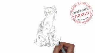 Как нарисовать мудрого кота поэтапно