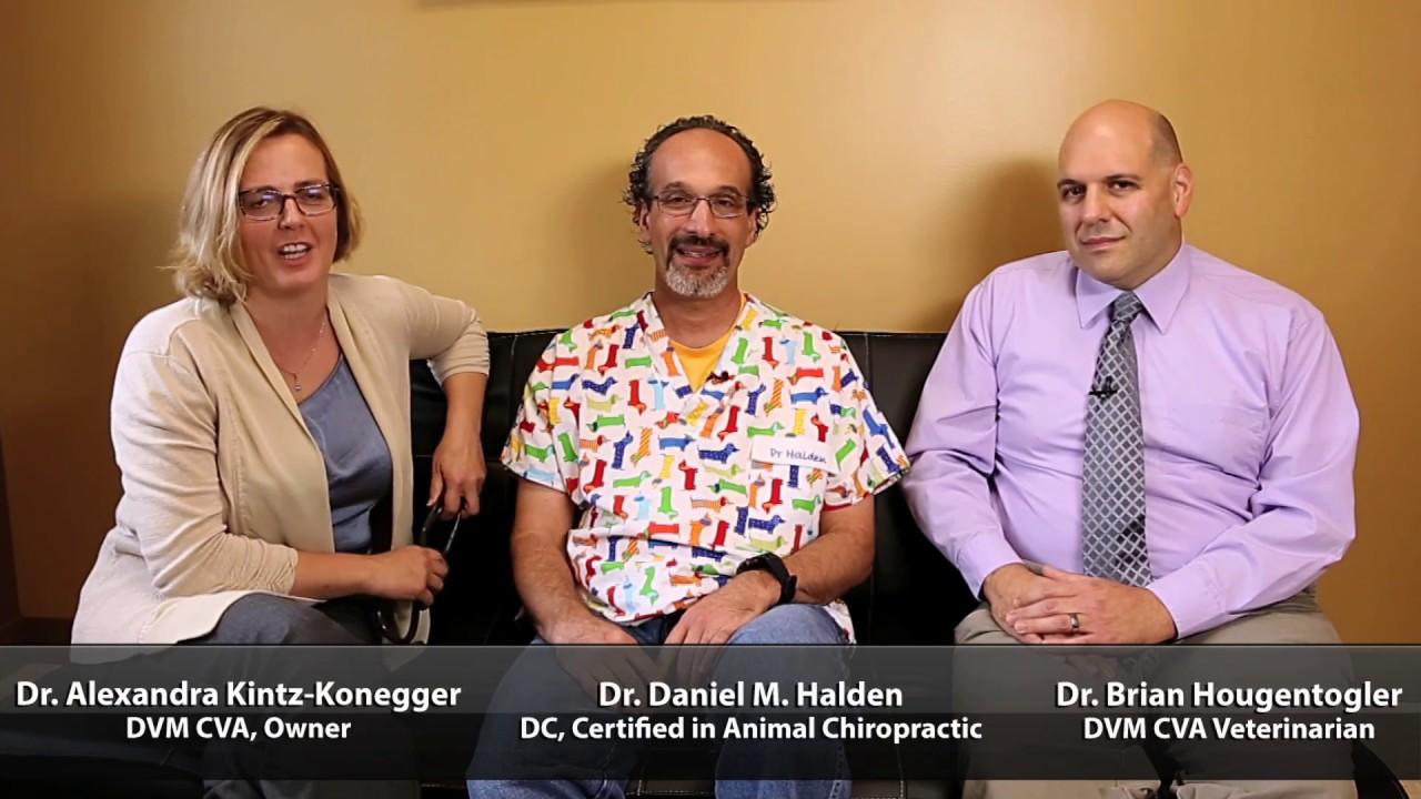 K  Vet Animal Care - Veterinarian in Greensburg, PA US