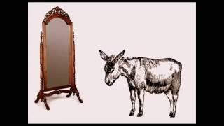 EL BURRO Y EL ESPEJO (Cuentacuentos)# burro  # espejo  # escri…
