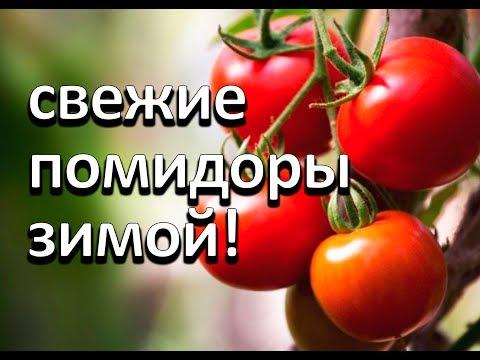 Супер способ хранения свежих помидор до зимы