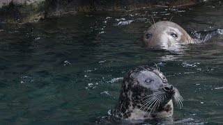How Are Seals Different from Sea Lions?