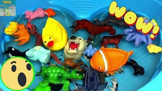Learn Sea Animals Farm Animals Zoo Animals Education Video and Animal Toys For Kids