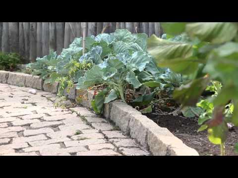 Cinco mandamentos para salvar sua horta no verão