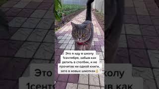 Приколы с кошками смешное видео с 1 сентября