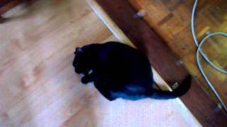 Cat Going Crazy For Catnip - What Catnip Does to Cats