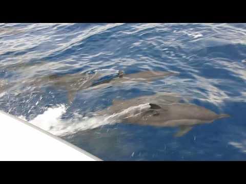 Diego Garcia Dolphins