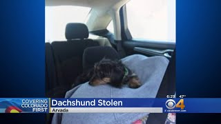 Police: Thieves Steal Car With Puppy Inside