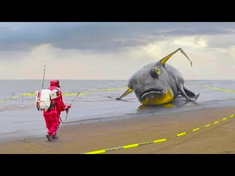 15 Strangest Things Washed Up on Beaches!