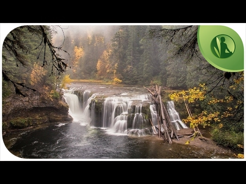 Sounds of Nature: Sounds of the Forest 🌿 Sounds of Water💧 Running Water 💦 Waterfall 🐦 Sounds Birds