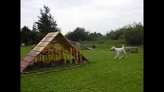 Central Asian Shepherd dog training
