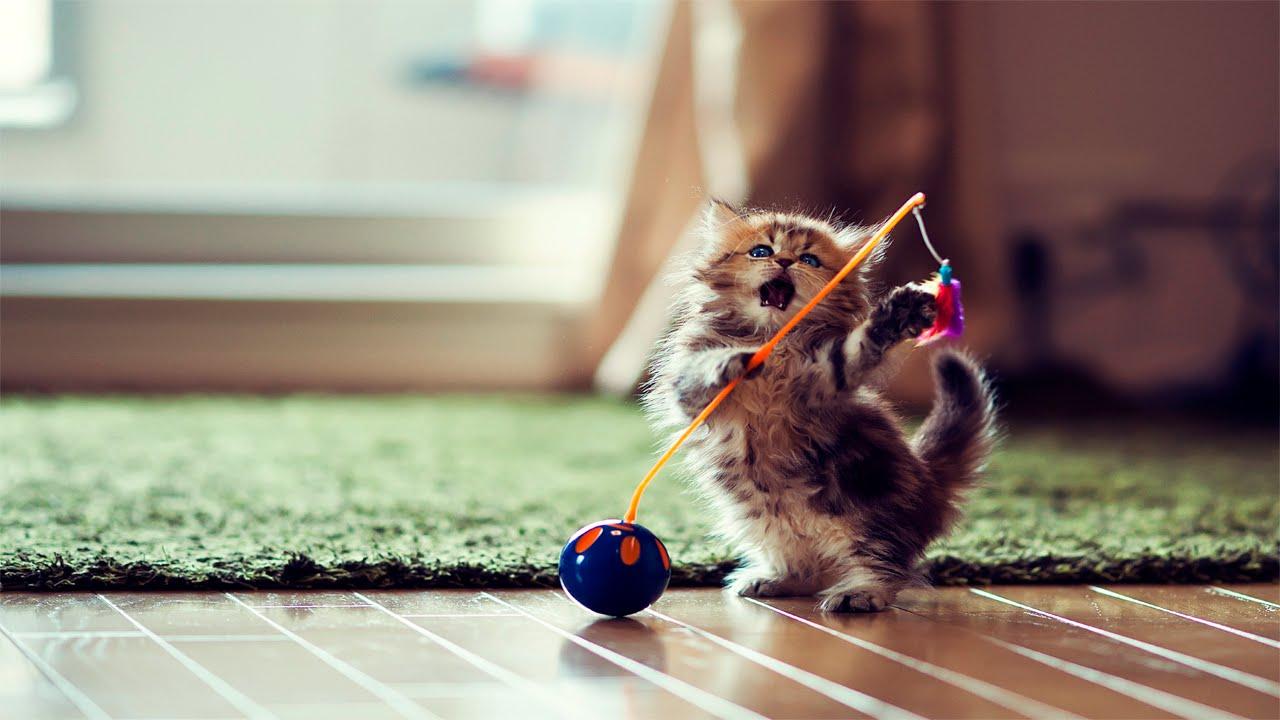 Funny Kittens 2015 Cute Kittens Funny Kittens pilation