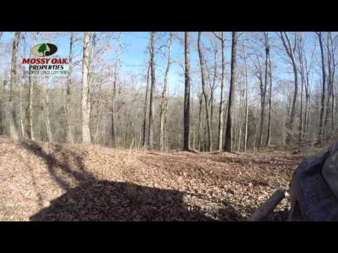 Hunting Land for Sale, 125 acres, near Pinson and Chickasaw State Park