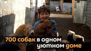 Женщина приютила 700 бездомных собак