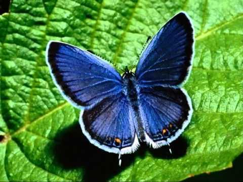 INESSA GALANTE Un bel dì, vedremo Madama Butterfly (LYRIC INFO)