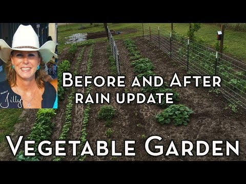 Vegetable Garden Before and After Rain Update
