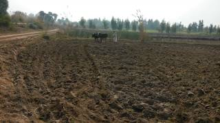 Pakistan punjab bandial tractor  farmer working