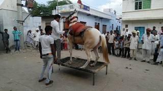horse-dancing