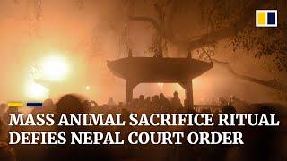 Mass animal sacrifices go ahead in Nepal despite court ban of the Hindu ritual