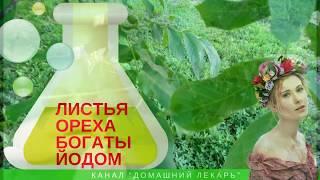 Чай из листьев грецкого ореха - Домашний лекарь - выпуск №76