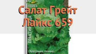 Салат обыкновенный Салат Грейт Лайкс 659 Кочанный 🌿 обзор: как сажать, семена салата