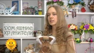 Домашние хранители вызывают интерес у алматинцев (24.11.15)