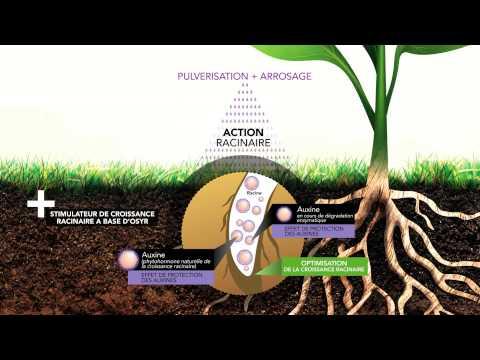 Programme Nutrition et Stimulation Frayssinet Agriculture