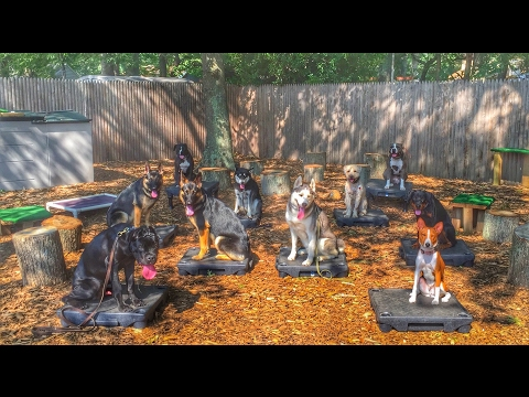 Providence Dog Trainers: Husky Off Leash Around Insane Distractions | Best Dog Trainers in RI