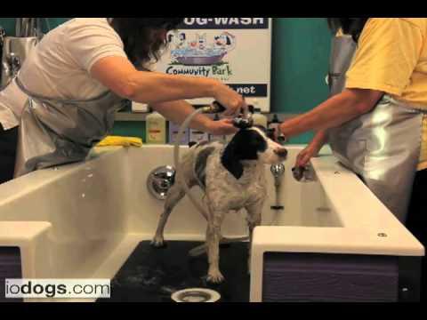 3 step dog grooming basics