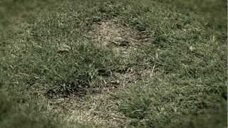Dog Rocks Commercial