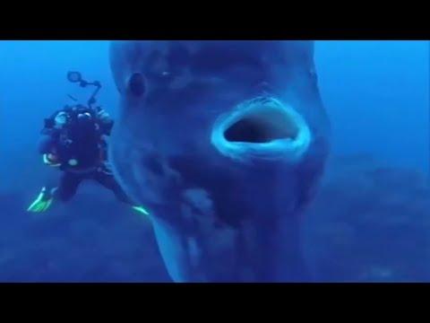 Огромная рыба - голова