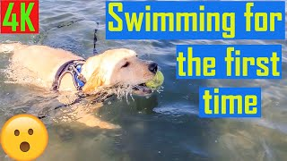 Dog Swimming at a Beach for the First Time | OMG Must Watch | Puppy Swimming First Time