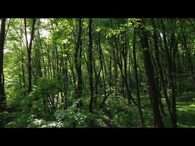 Der Wald - DJI Mini 2