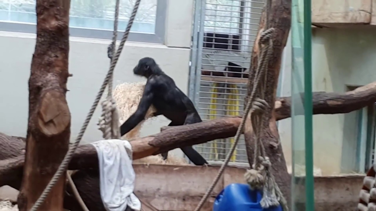 Bili Zoo Wuppertal