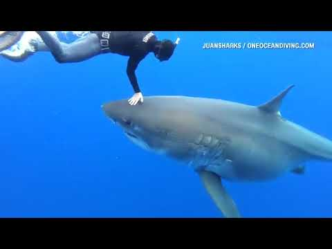 Brian Fink - Researchers Come Face-To-Face With Massive Great White Shark [VIDEO]