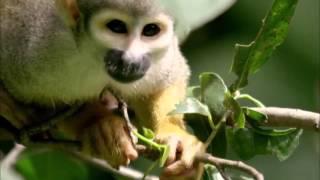 Der Affe in uns Wie der Mensch zu seinem Körper kam (komplett 720p)
