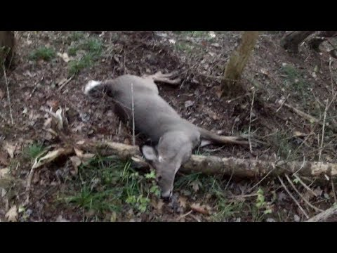GoPro Deer Hunting