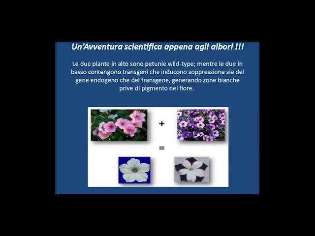 Seminario Tor Vergata - 8 Marzo 2014 - 03 Prof  Vittorio Colizzi