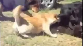 Разняли пацанов. Драка реальных котов! Банда животных.