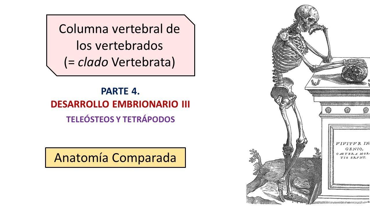 Increíble Anatomía Comparada Y La Embriología Motivo - Imágenes de ...