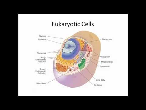 Prokaryotic Cells and Eukaryotic Cells