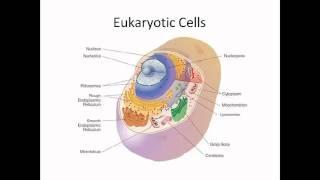Prokaryotic Cells and Eukaryotic Cells