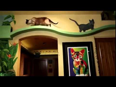 Man Turns His House Into Indoor Cat Playland! bagz co uk