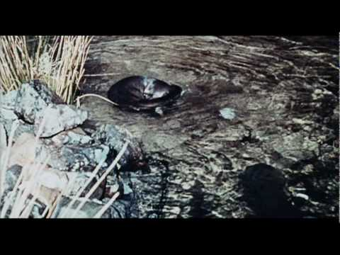 Ring of Bright Water Trailer
