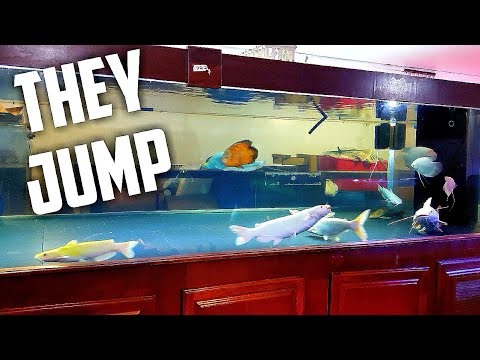 Fish Madness! Crazy Fish Jumps Out ... TWICE!!!!