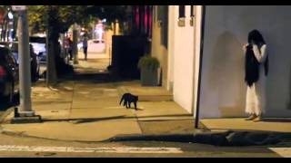 "SCARY CAT PRANK ""SCARY DEAD GIRL"""