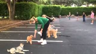 Obedience Group Class - Dog And Puppy Training In Miami Flo